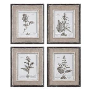 Uttermost Butterfly Plants Framed Art Set of 4